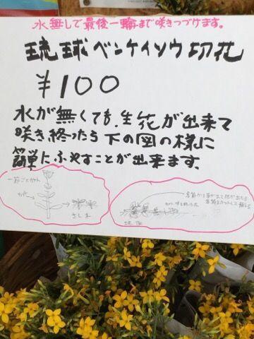 f:id:nekowamegusuri163:20190205100329j:plain