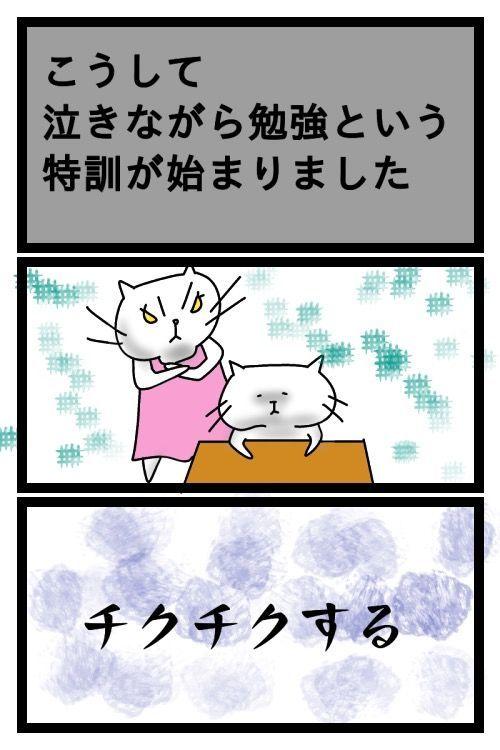 f:id:nekowamegusuri163:20190420161421j:plain