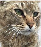 f:id:nekowamegusuri163:20200420145322j:plain