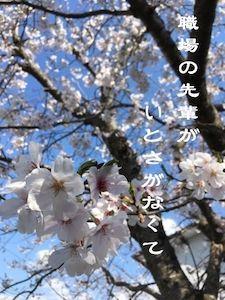 f:id:nekowamegusuri163:20200425145519j:plain