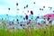 美ヶ原高原の花 4