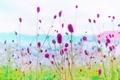 美ヶ原高原の花 3