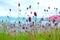 美ヶ原高原の花 2
