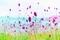 美ヶ原高原の花 1