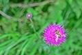 美ヶ原高原の花