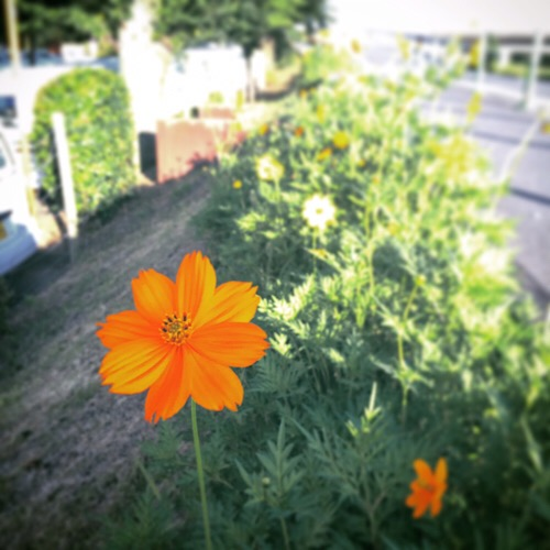 オレンジの花 20190619a