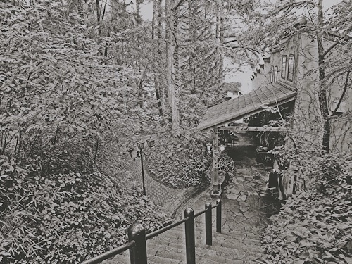 ロックハート城の森にて