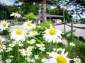 那須高原の花