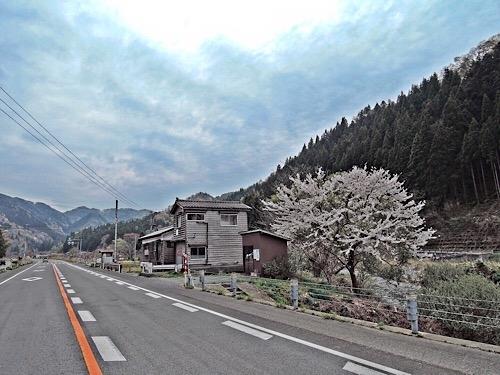鶴岡の桜かな 3