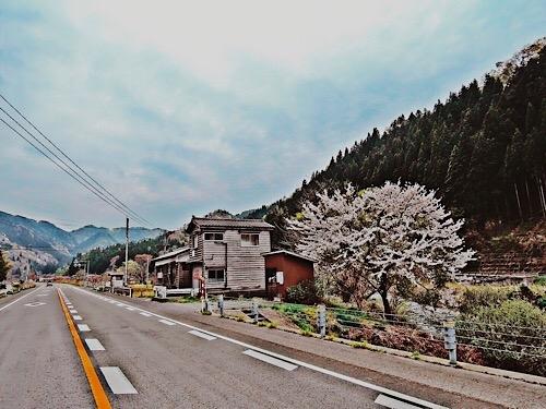 鶴岡の桜かな 2