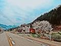 鶴岡の桜かな 1
