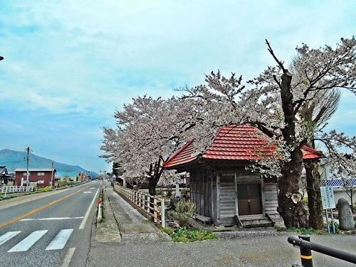鶴岡市の桜 20190609c