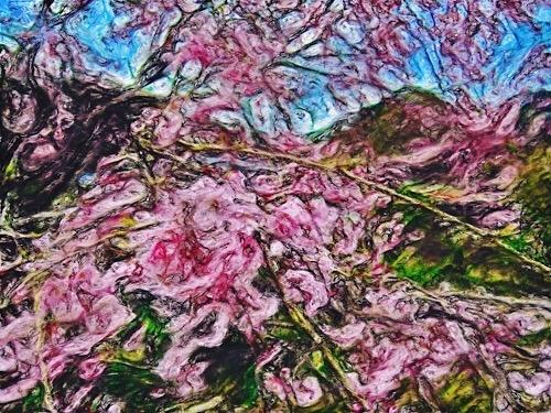 新潟県村上市の桜かな