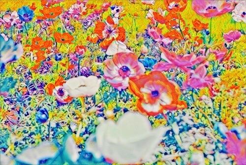 昭和記念公園の花 2