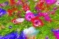 昭和記念公園の花 1