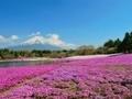 富士山と芝桜 20190604