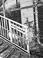 百人町一丁目歩道橋  20190619a