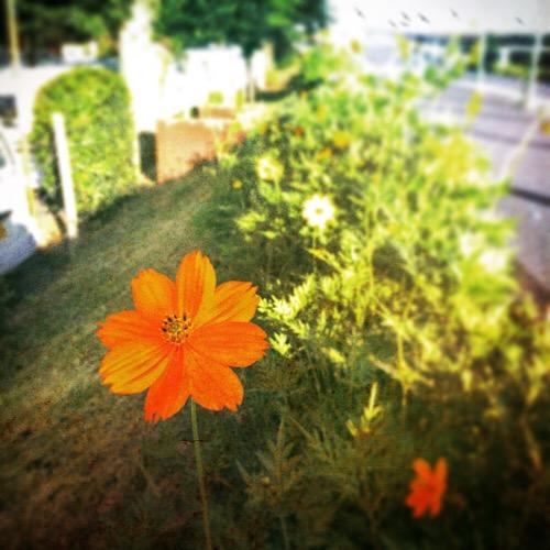 オレンジの花 20190619b