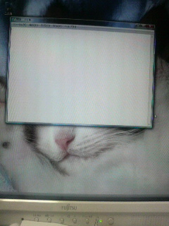 家のデスクトップが、なんか卑猥(笑)