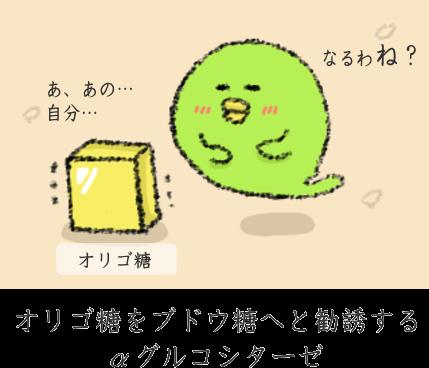 オリゴ糖の分解