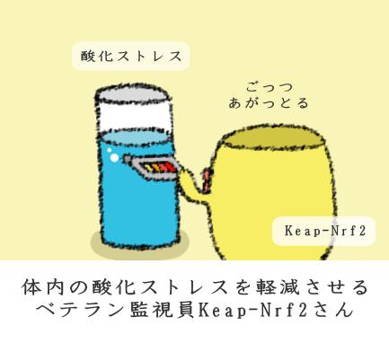 f:id:nekoyamachan:20170323133819p:plain