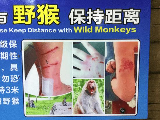 七星公園の野生の猿