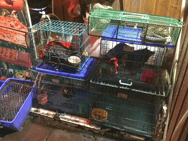 鳳凰のご飯屋の動物たち