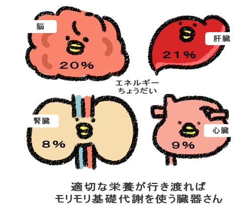 適切な栄養が行き渡れば モリモリ基礎代謝を使う臓器さん