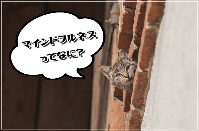 f:id:nekoyamachan:20180808142147p:plain