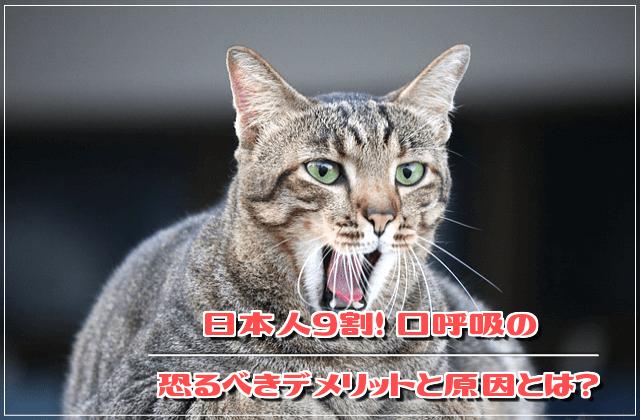 f:id:nekoyamachan:20180815150651p:plain