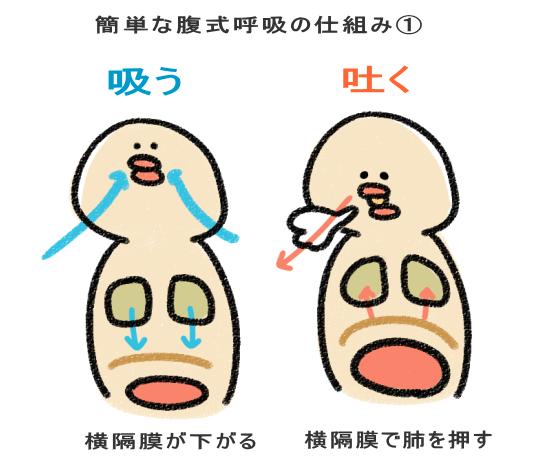 簡単な腹式呼吸の仕組み➀