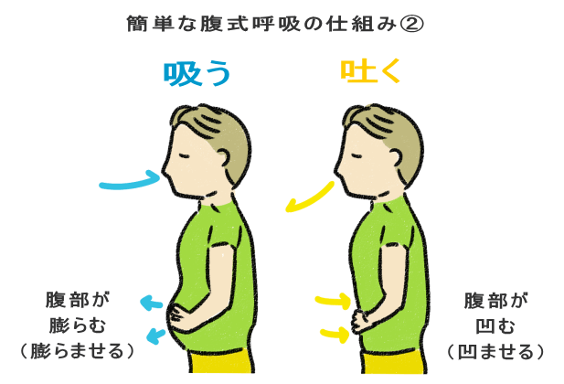 簡単な腹式呼吸の仕組み②