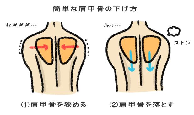 簡単な肩甲骨を下げる方法