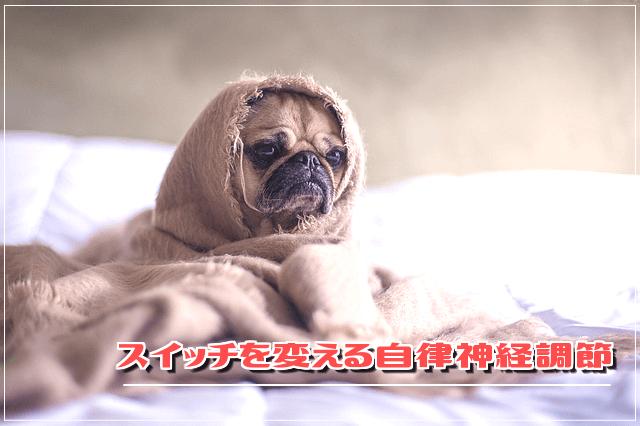 f:id:nekoyamachan:20181016133626p:plain