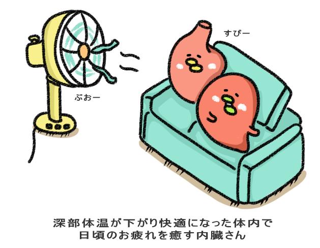 深部体温が下がり快適になった体内で 日頃のお疲れを癒す内臓さん