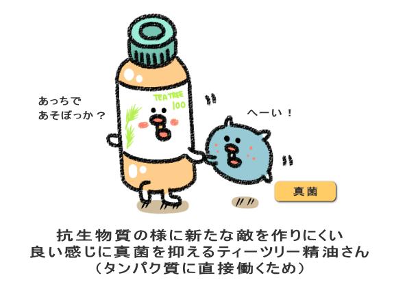 抗生物質の様に新たな敵を作りにくい 良い感じに真菌を抑えるティーツリー精油さん (タンパク質に直接働くため)