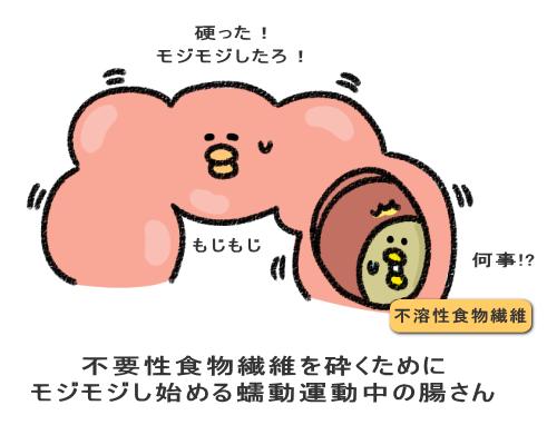 不要性食物繊維を砕くために モジモジし始める蠕動運動中の腸さん