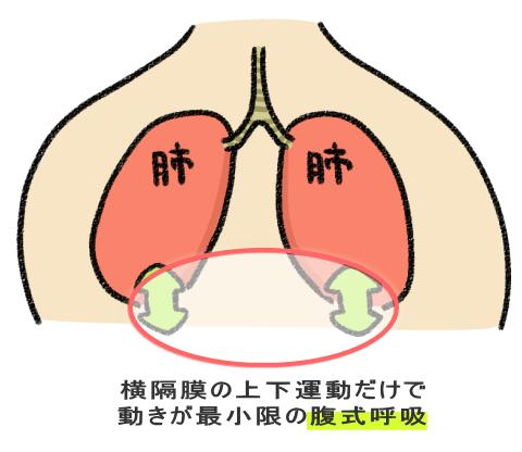 横隔膜の上下運動だけで 動きが最小限の腹式呼吸