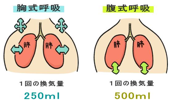 腹式呼吸と胸式呼吸の換気量の違い