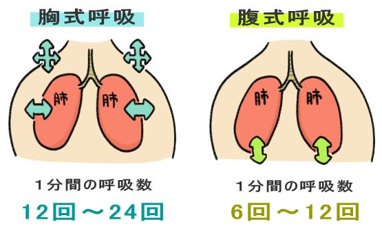 胸式呼吸と腹式呼吸の呼吸回数の差