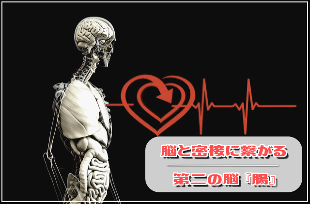 脳と密接に繋がる、第二の脳『腸』