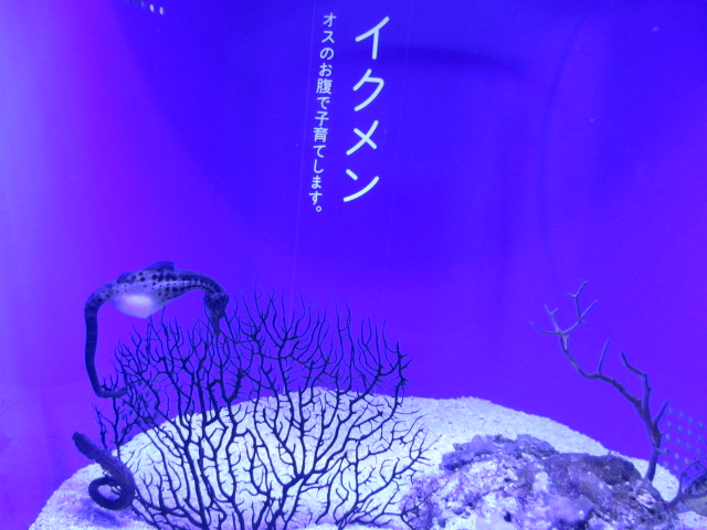 f:id:nekoyamada255:20120623085117j:image