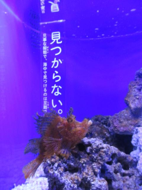 f:id:nekoyamada255:20120623085348j:image