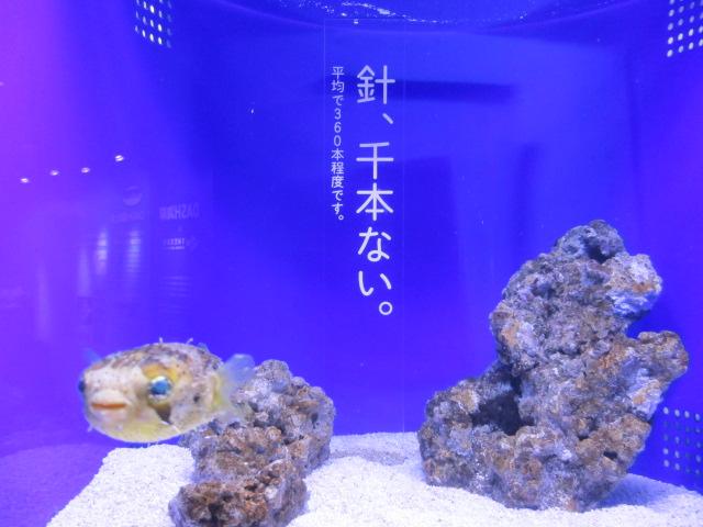 f:id:nekoyamada255:20120623085621j:image