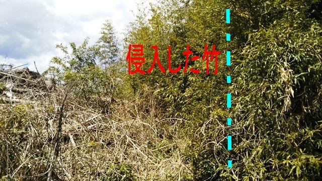 f:id:nekoyanookami:20190415215800j:plain