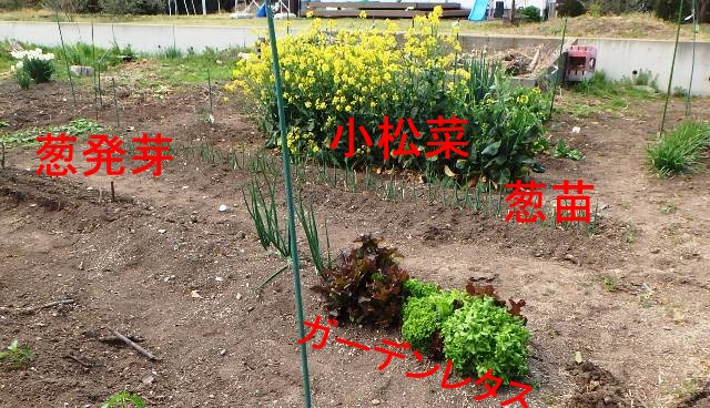f:id:nekoyanookami:20190422230144j:plain
