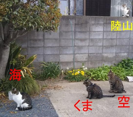 f:id:nekoyanookami:20190422231743j:plain