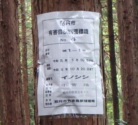 f:id:nekoyanookami:20190721172820j:plain
