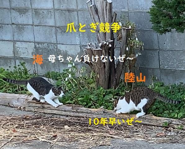 f:id:nekoyanookami:20190816121148j:plain