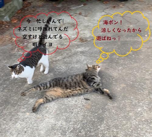 f:id:nekoyanookami:20190820194748j:plain